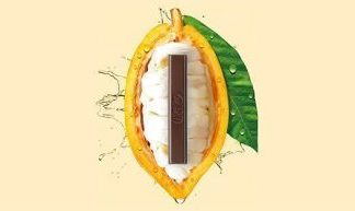 Unique chocolate made entirely from the cocoa fruit