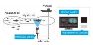 Yanmar's Automated Fish Counting System uses image recognition Diagram Yanmar