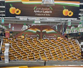 Ladakh apricots